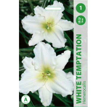 VIENDIENĖS WHITE TEMPTATION