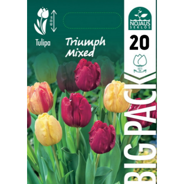 TULPĖS BIG PACK MIX TRIUMPH...