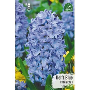 HIACINTAI DELFT BLUE BEST...