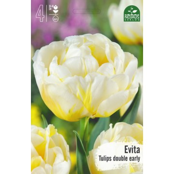 TULPĖS EVITA BEST SELLER