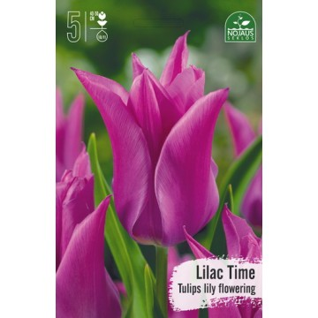 TULPĖS LILAC TIME BEST SELLER