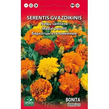 SERENTIS GVAZDIKINIS