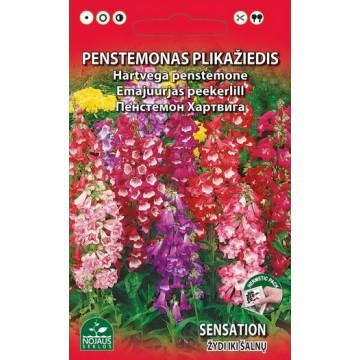 PENSTEMONAS PLIKAŽIEDIS