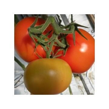 Pomidorai Baribine 8s