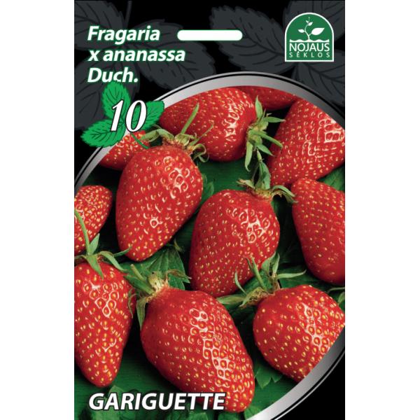 Braškės Frigo Gariguette A, 1 dėžė (600vnt.)