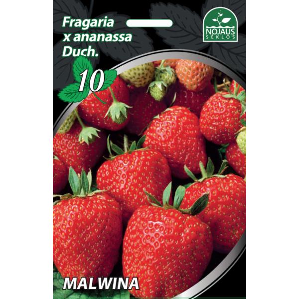 Braškės Frigo Malwina A, 1 dėžė (500vnt.)
