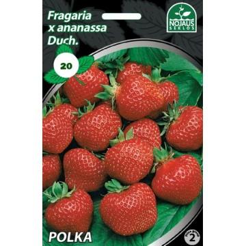 BRAŠKĖS FRIGO POLKA B (20...