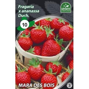 BRAŠKĖS FRIGO MARA DES BOIS...