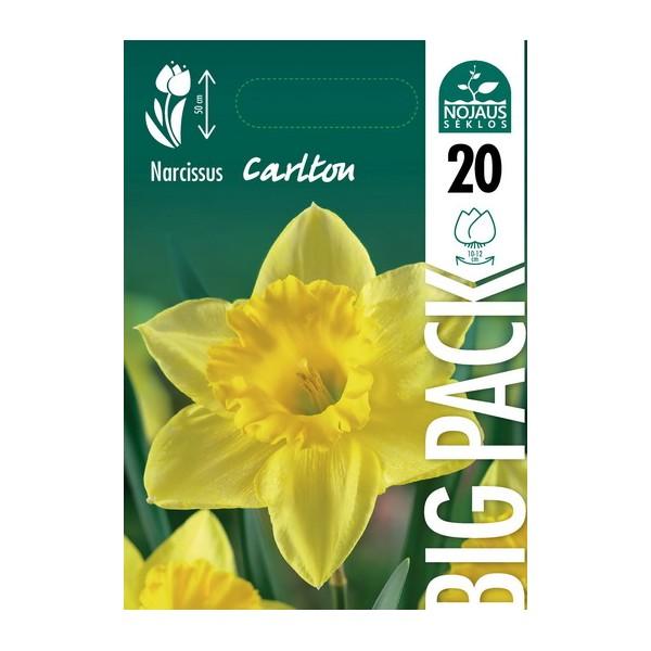 NARCIZAI BIG PACK CARLTON (20 vnt.)
