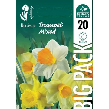 NARCIZAI BIG PACK TRUMPET...