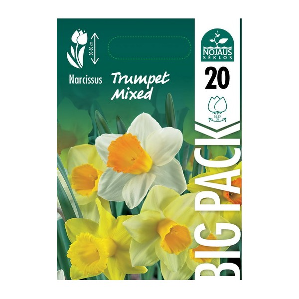 NARCIZAI BIG PACK TRUMPET MIXED (20 vnt.)
