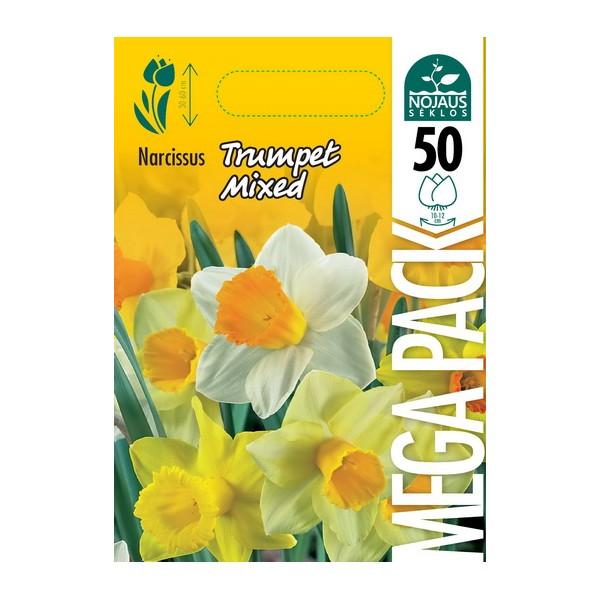 NARCIZAI MEGA PACK TRUMPET MIXED (50 vnt.)
