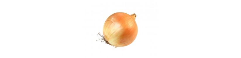 Svogūnai, svogūnų sėklos