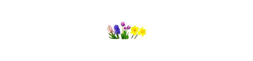 Rudenį sodinamos gėlės