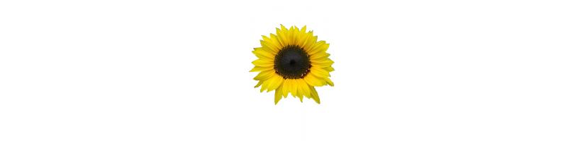 Kitos gėlės, sėklos
