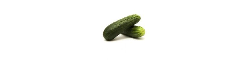 Agurkai, agurkų sėklos